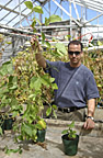 New federal grant fuels soybean research at SIUC