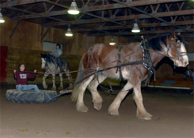 Chip, Dale are big additions to equine program