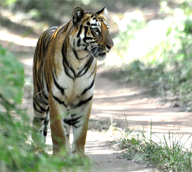 Tiger reserve in central India